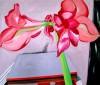 Amaryllis 1, 170 x 200 cm, Öl/N, 2000